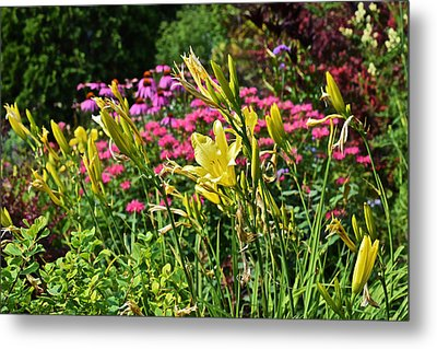 Late July Garden 1 Metal Print by Janis Nussbaum Senungetuk