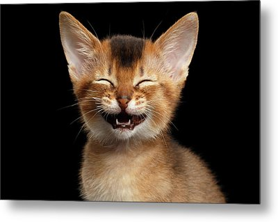 Laughing Kitten  Metal Print by Sergey Taran