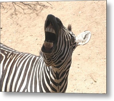 Metal Print featuring the photograph Laughing Zebra by Jeanette Oberholtzer