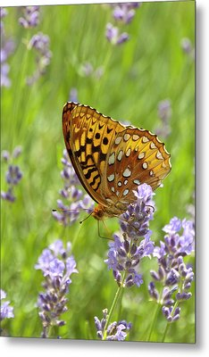 Lavender And Butterfly 2 Metal Print