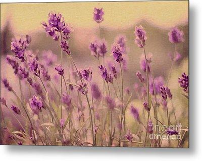 Lavender Dreaming ... Metal Print