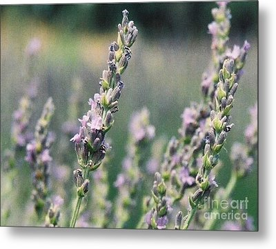 Metal Print featuring the painting Lavender by Eric  Schiabor