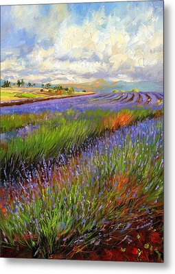 Lavender Field Metal Print by David Stribbling
