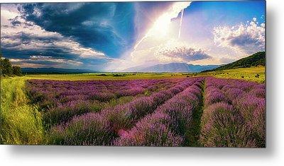 Lavender Field Panorama Metal Print