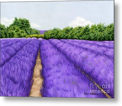 Lavender Fields Metal Print by Sarah Batalka