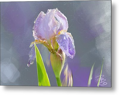Lavender Iris In The Morning Sun Metal Print