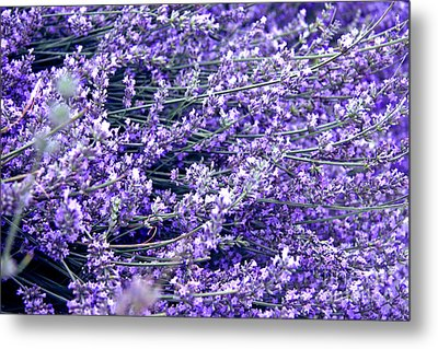 Lavender Metal Print by Lali Kacharava