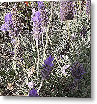 Lavender Moment Metal Print by Winsome Gunning