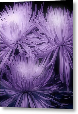 Lavender Mums Metal Print by Tom Mc Nemar