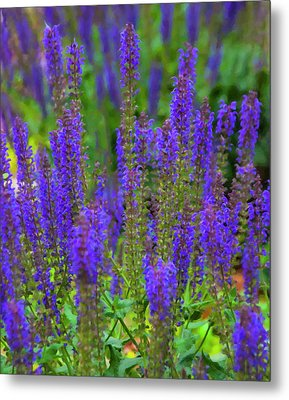 Metal Print featuring the digital art Lavender Patch by Chris Flees