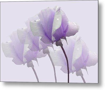 Lavender Roses  Metal Print by Rosalie Scanlon