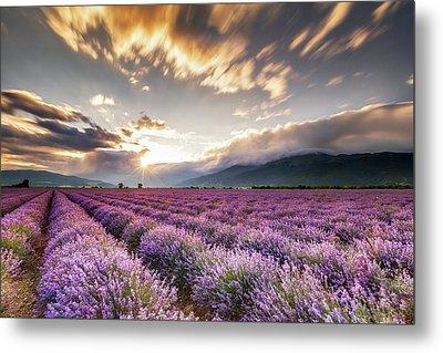 Lavender Sun Metal Print by Evgeni Dinev