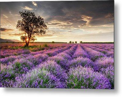 Lavender Sunrise Metal Print by Evgeni Dinev