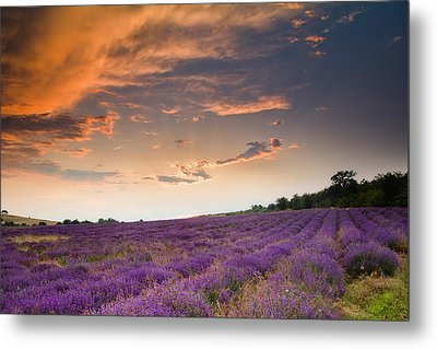 Lavender Sunset Metal Print by Evgeni Dinev