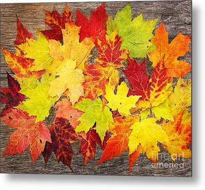 Layered In Leaves Metal Print by Kathi Mirto