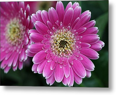 Layers Of Spring Metal Print by Pamela Critchlow