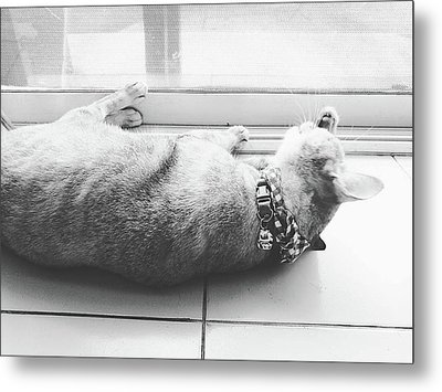 Laying Cat Cleaning Herself On Ground Black And White Color Metal Print