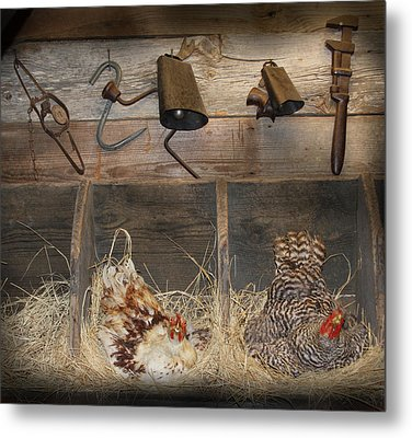 Laying Hens Metal Print by Kim Henderson