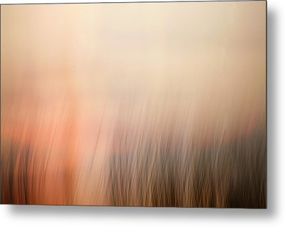 Laying Low At Sunrise Metal Print by Marilyn Hunt