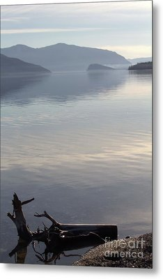 Metal Print featuring the photograph Laying Still by Victor K