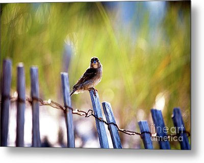 Metal Print featuring the photograph Lbi Beach Bird by John Rizzuto