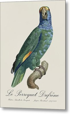 Le Perroquet Dufrene - Restored 19th Century Parrot Illustration By Jacques Barraband Metal Print by Jose Elias - Sofia Pereira