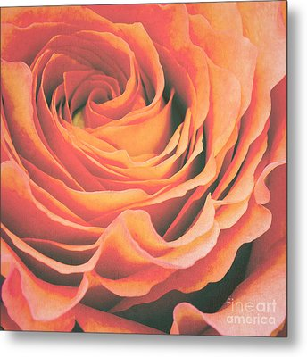 Le Petale De Rose Metal Print by Angela Doelling AD DESIGN Photo and PhotoArt