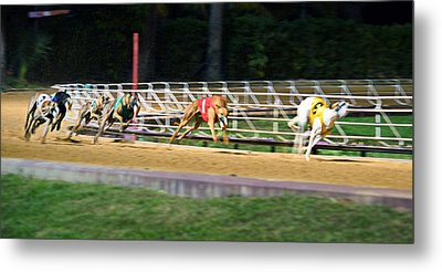 Leader Of The Pack Metal Print by Keith Armstrong