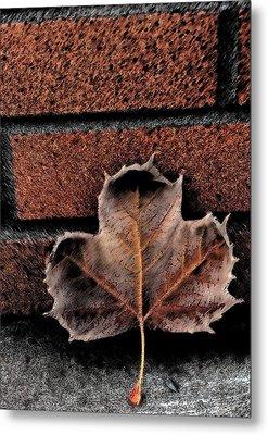 Leaf Metal Print by Cherie Duran