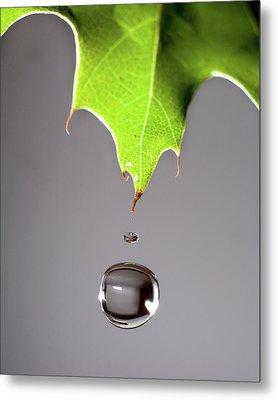 Leaf Drip Metal Print