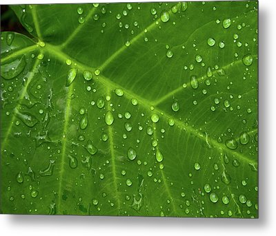 Leaf Drops Metal Print