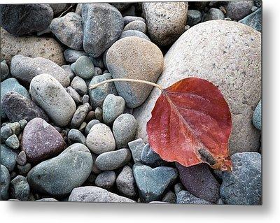 Leaf On River Rocks Metal Print
