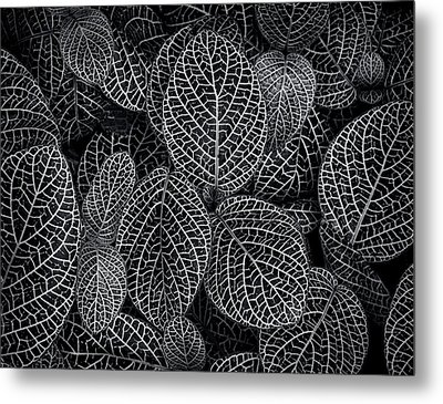 Metal Print featuring the photograph Leaf Pattern by Wayne Sherriff
