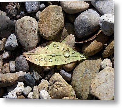 Leaf With Water Droplets In Rocks Metal Print