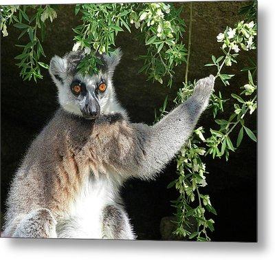 Leafy Patterned Lemur Metal Print