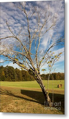 Leaning Tree - Natchez Trace Metal Print by Debra Martz