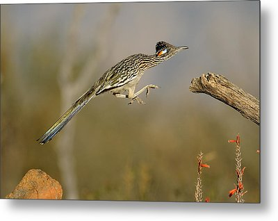 Leaping Roadrunner Metal Print by Scott  Linstead