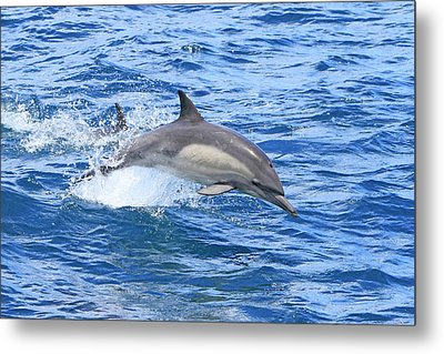 Leaping Metal Print by Shoal Hollingsworth