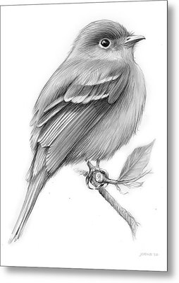 Least Flycatcher Metal Print by Greg Joens