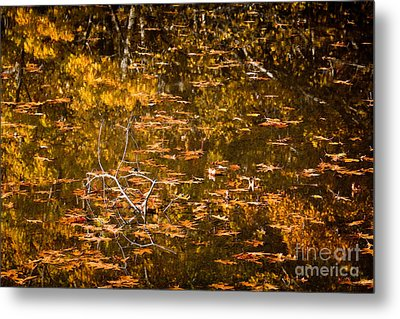 Leaves And Reflections Metal Print by Susan Cole Kelly