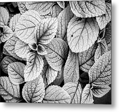 Leaves Black And White - Nature Photography Metal Print by Ann Powell