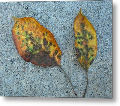 Leaves Metal Print by Gonca Yengin
