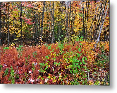 Leaves Of Many Colors  Metal Print by Catherine Reusch Daley