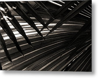 Leaves Of Palm Black And White Metal Print by Marilyn Hunt