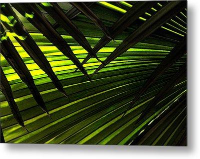 Leaves Of Palm Color Metal Print by Marilyn Hunt