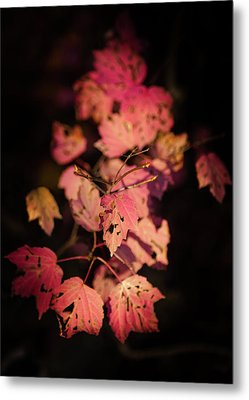 Leaves Of Surrender Metal Print by Karen Wiles