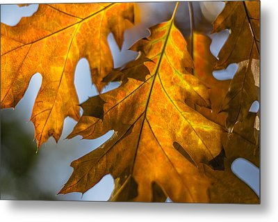 Leaves Metal Print