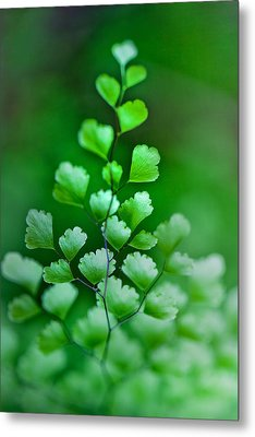 Leaves Rising Metal Print