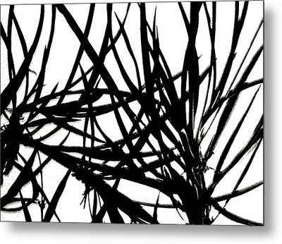 Lee Krasner Spider Plant Detail 1 Metal Print by Dick Sauer