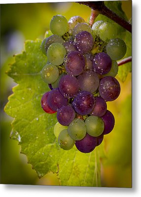 Leftover Pinot Cluster Metal Print by Jean Noren